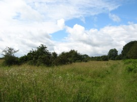 Ibstone Common
