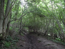 Path in Commonhill Wood
