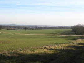 Toot field