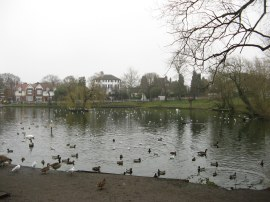 Prickend Pond, Chislehurst