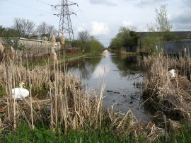 The end of the Slough Arm