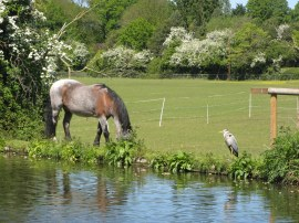 Pony and Heron besides the canal