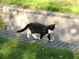 Cat by Marsworth Lock
