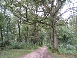 Hurt Wood, Nr Holmbury St Mary