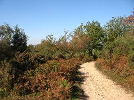 Path over Hindhead Common