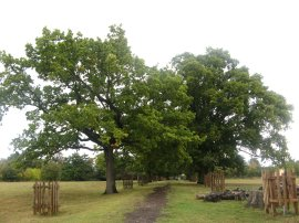 The Oak Walk, Pishiobury Park