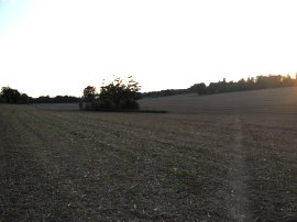Field nr Waldershare House