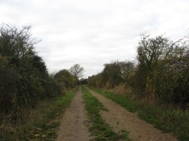 Path leading to Dots and Melon Farm