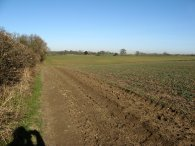 Hertfordshire Way nr Upwick Green