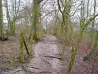Path, Therfield Heath