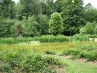Pond, Chipperfield Common