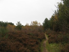 St Leonards Forest