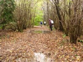 Soggy path through Long Wood