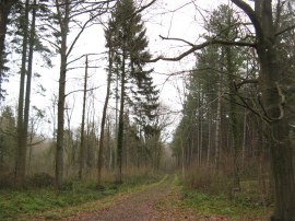 Minepit Wood