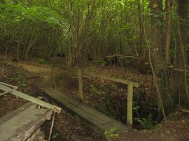 Woodland Footbridge
