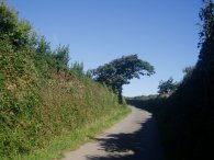 Quiet lane nr Padstow