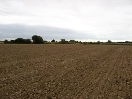 Fields nr Warehorne