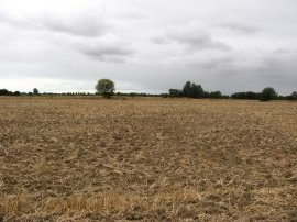 Fields, Romney Marsh