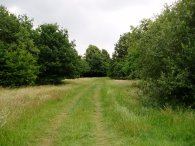Epsom Common