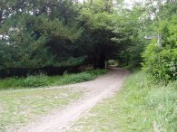 Path a Mickleham Downs