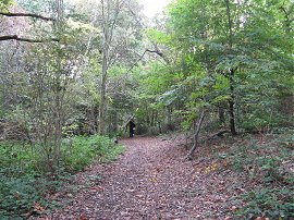 Littleheath Woods