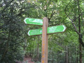 Signpost in Littleheath Woods