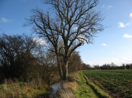 Stour Valley Path, nr Egerton