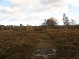 Hothfield Common