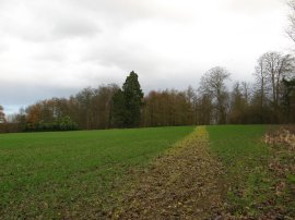 Approaching Worten Wood