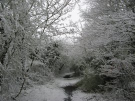 Path from Calvert Road