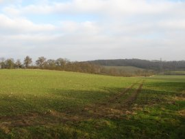 View towards Galleyhill Wood