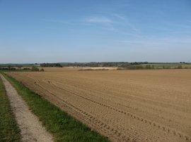 Fields nr Sholden