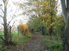 Path by Barn Elms Playing Fields