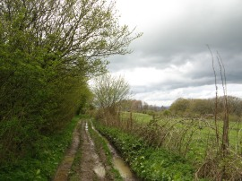 Path along the Downs